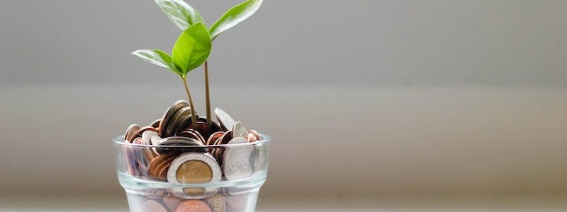 plant potted in coins